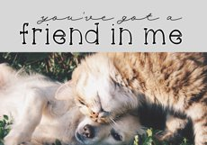 Cats and Dogs - A Cute Handwritten Font Product Image 3