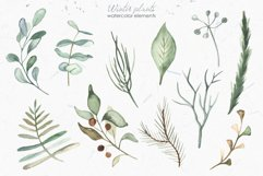 Winter plants watercolor collectoin Product Image 6