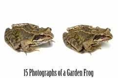 Common Garden Frog 15 Photographs in Different Angles JPG Product Image 4