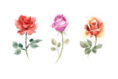5 watercolor roses Product Image 3