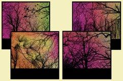 Sunset Forest Glitter Snapshot Backgrounds - 10 Image Set Product Image 4