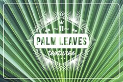 11 Palm Leaves Textures Product Image 1