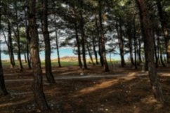 A selection of landscapes with defocused backgrounds. 4pcs Product Image 4