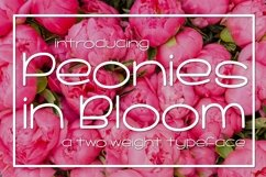 Web Font Peonies in Bloom Product Image 1