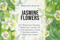 Jasmine flowers and leaves. Watercolor clip art. Product Image 1