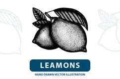Lemons engraving style illustration. Product Image 1