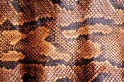 20 Coloured Snake Print Snakeprint Skin Photograph Bundle! Product Image 5