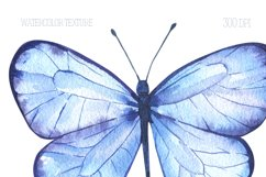 Butterfly Watercolor Clipart PNG Product Image 5
