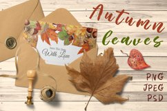 Autumn leaves, watercolor Product Image 1