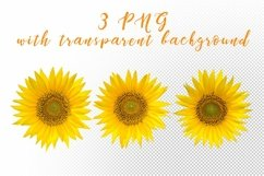 Sunflower. JPG, PNG. Product Image 3
