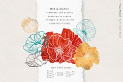Poppy Blossom Vector Illustrations Product Image 2