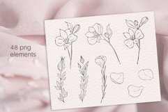 Peony flowers procreate stamp brushes, clipart Product Image 4