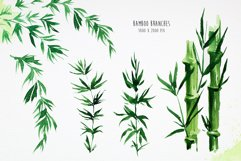 Bamboo. Watercolor illustrations. Product Image 2