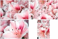 40 Pink Flower Blossom Photographs Close Up Product Image 4
