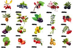 Berries digital art collection 2. 20 illustrations Product Image 2