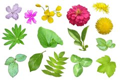15 summer plant elements PNG Product Image 3