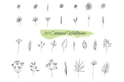 Collection sketches plants Product Image 1