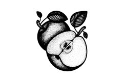 Apples hand drawn vector illustration. Product Image 2