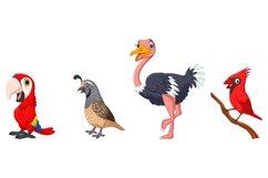 Set of Seven Cartoon Birds Character Product Image 3