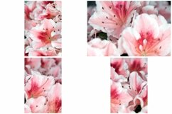 40 Pink Flower Blossom Photographs Close Up Product Image 5