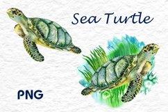 Sea turtle. Watercolor Green turtle Product Image 3