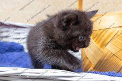 13 photos of little kittens Product Image 5