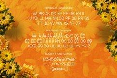 Web Font Dutamisxa Font Product Image 5