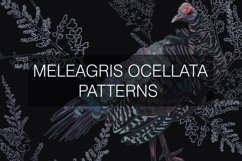 Meleagris ocellata patterns Product Image 4