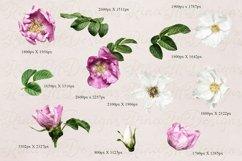 Wild roses clipart. Pink and white roses bouquets. Product Image 2