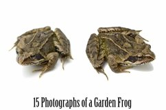 Common Garden Frog 15 Photographs in Different Angles JPG Product Image 6