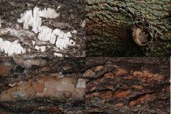 Set of forest backdrops - tree bark backgrounds Vol4 Product Image 3
