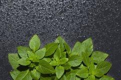 Basil leaves border on dark background. Product Image 1