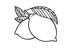 Lemons engraving style illustration. Product Image 2