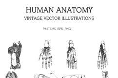 Vintage Vector Illustrations Bundle 1391 Items Product Image 5