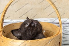 13 photos of little kittens Product Image 2