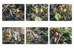 Small Mushrooms Stock Photo Bundle Product Image 2