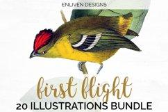 Birds Bundle Vintage Clipart Set Product Image 2