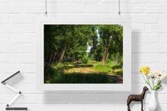 Path in the forest - Wall Art - Digital Print - Home Decor Product Image 1