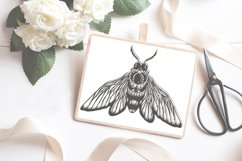 Bug insect papercutting sublimation graphic illustration Product Image 1