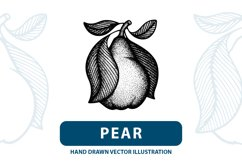 Pear hand drawn vintage style vector illustrations. Product Image 1