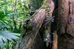 Moss on an old tree log in a rainforest. Product Image 1