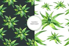Watercolor succulents set Product Image 4