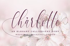 Gorgeous Bundle - 14 Fonts in 1 Pack Product Image 5