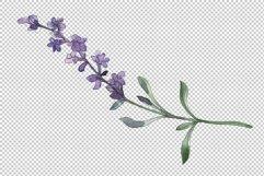 Bouquet summer breeze lavender watercolor png Product Image 4
