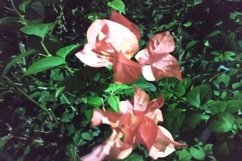 beautiful paper flowers at night Product Image 1
