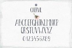 Chervil Product Image 4