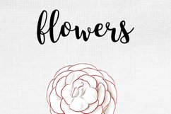 Carnation Clipart Flower Product Image 10