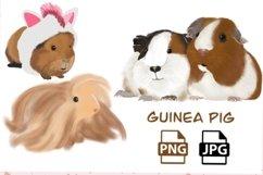 guinea pig illustration Product Image 1