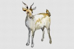 Agriculture goat Watercolor png Product Image 2