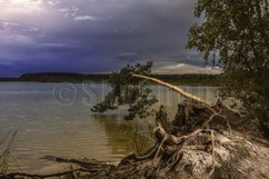 pine on the lake before a thunderstorm Product Image 1